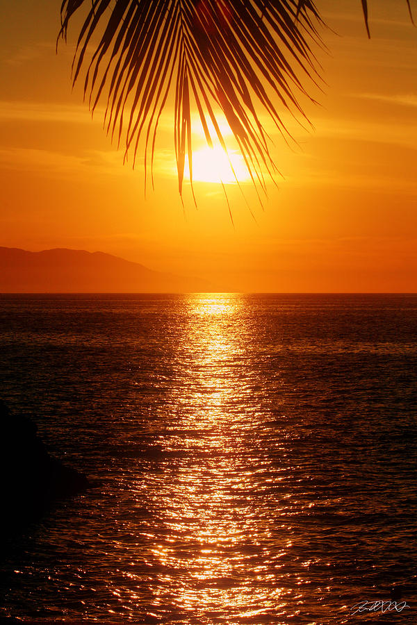 Puerto Vallarta Photograph - Sunset In The Frawn by Jason Blalock