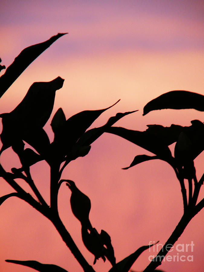 Sunset Photograph - Sunset Silhouette by Rose  Hill
