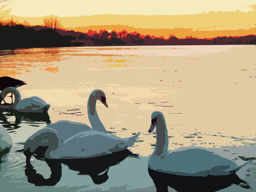 Red Sky Photograph - Swans At Sunset by James Hill