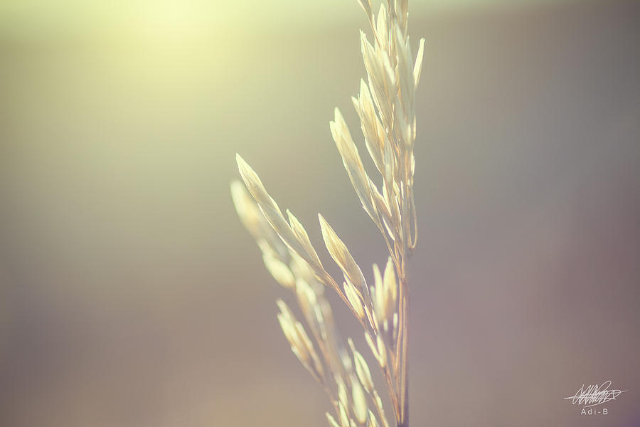 Nature Digital Art - Tall Grass by Adnan Bhatti