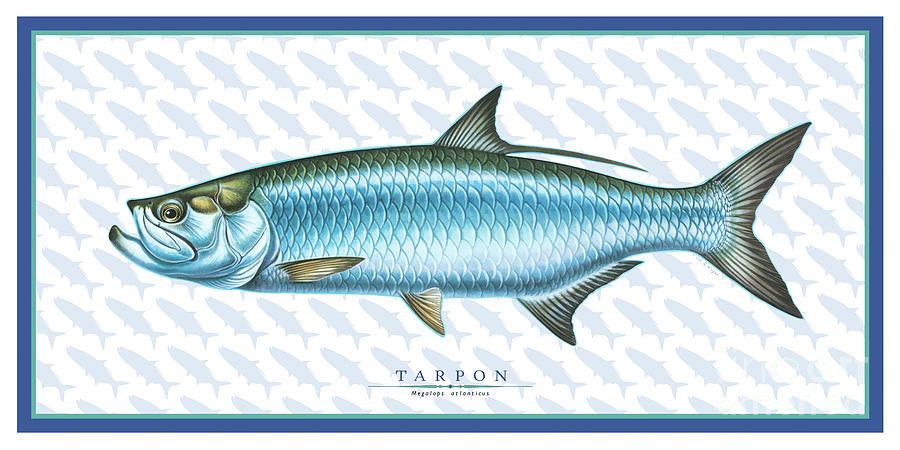 Tarpon ID by Jon Q Wright