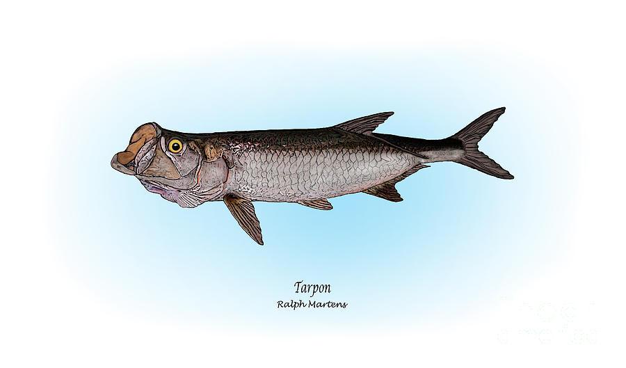 Tarpon Painting - Tarpon by Ralph Martens