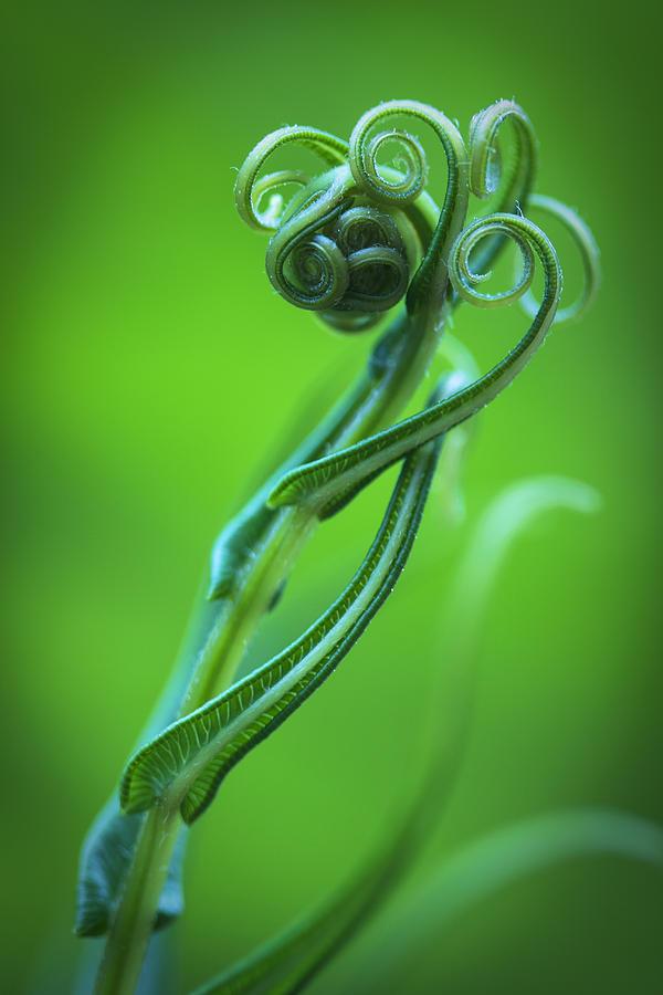 Tendrils Photograph - Tendrils by Zoe Ferrie