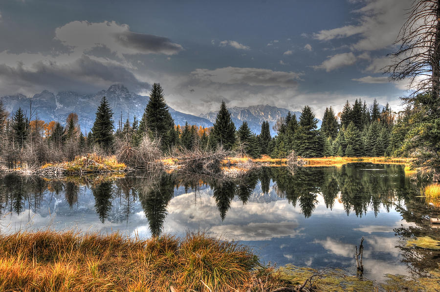 Teton Beaver Pond by David Armstrong