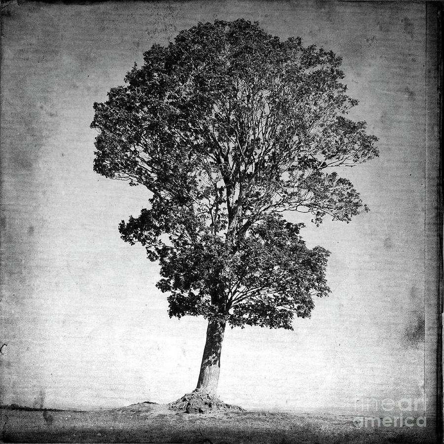 Alone Photograph - Textured Tree by Bernard Jaubert