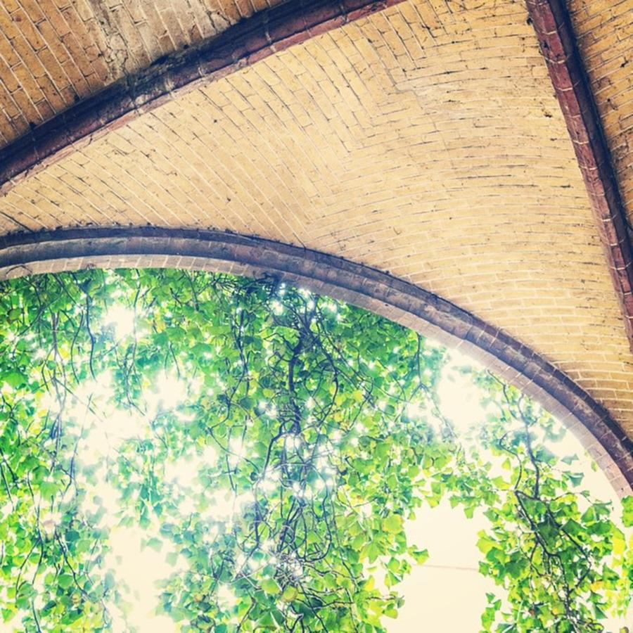 Greenery Photograph - The Arch by Aleck Cartwright