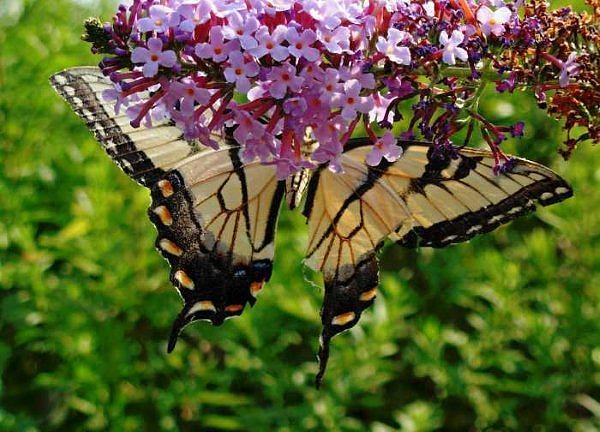 Butterflies Photograph - The Beauty Of Nature by Amanda Vouglas