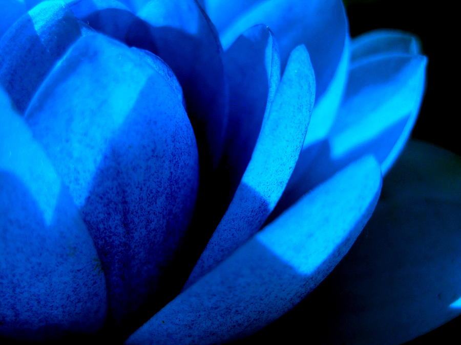 Blue Photograph - The Blue Lilly by Catherine Natalia  Roche