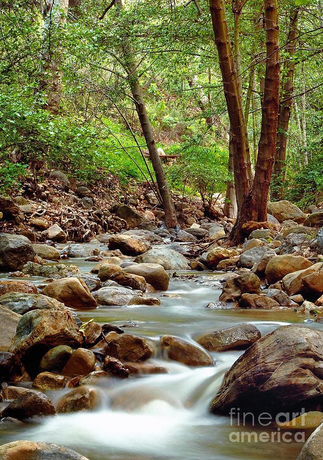 Creek Photograph - The Creek by Marc Bittan