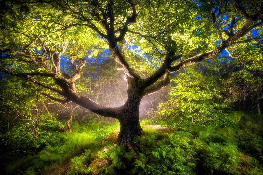 The Enchanted Tree, Craggy Pinnacle, Blue Ridge Parkway by Tommy  White
