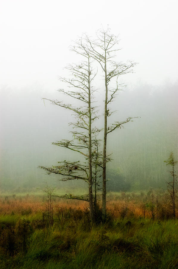 Tree Photograph - The Foggy Dew by Rich Leighton