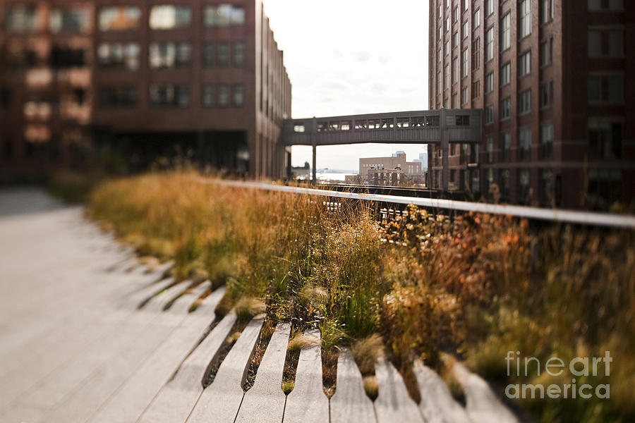 Architectural Detail Photograph - The High Line Park by Eddy Joaquim