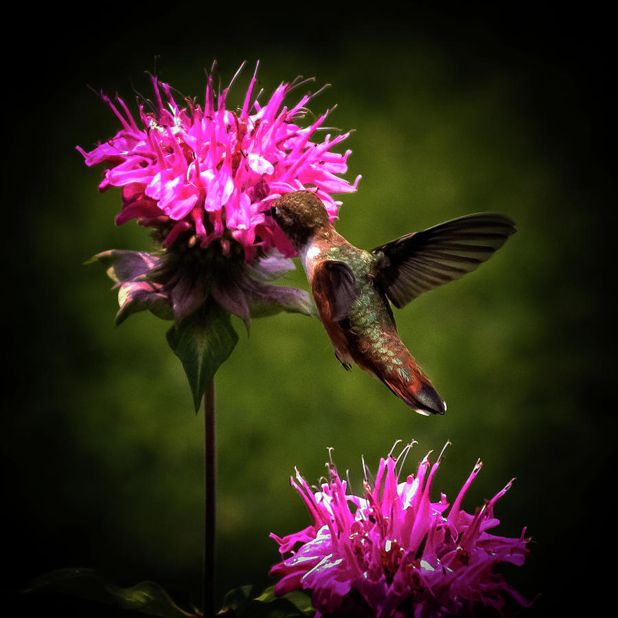 The Hummer Photograph - The Hummer by David Patterson