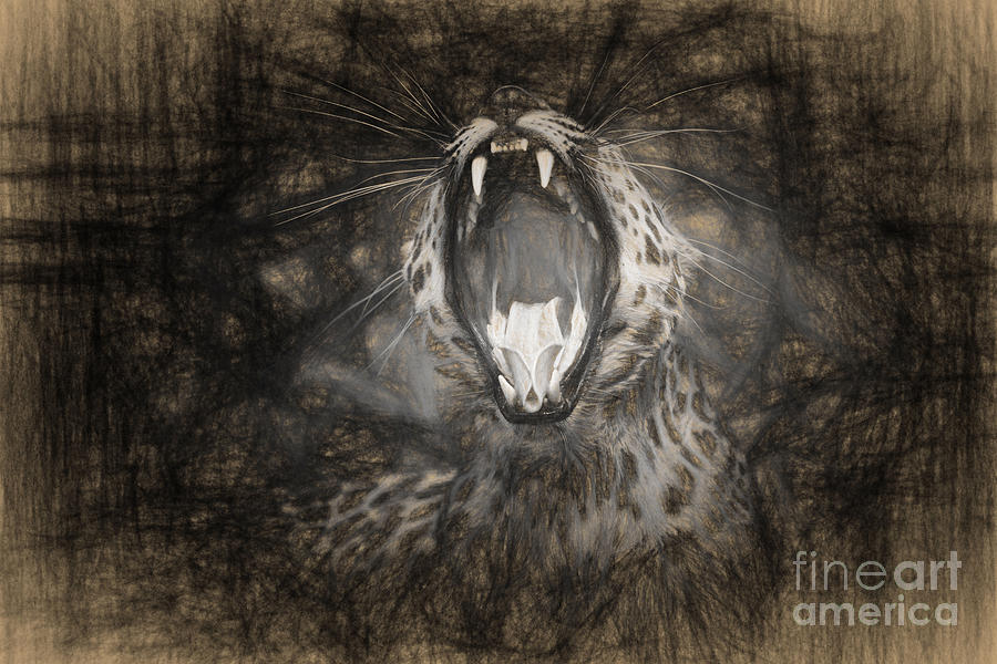 The Leopards Tongue Rolling Roar IIi Photograph