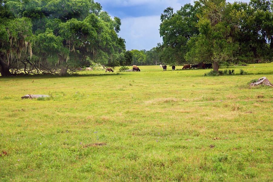 The Meadow by Judy Wright Lott