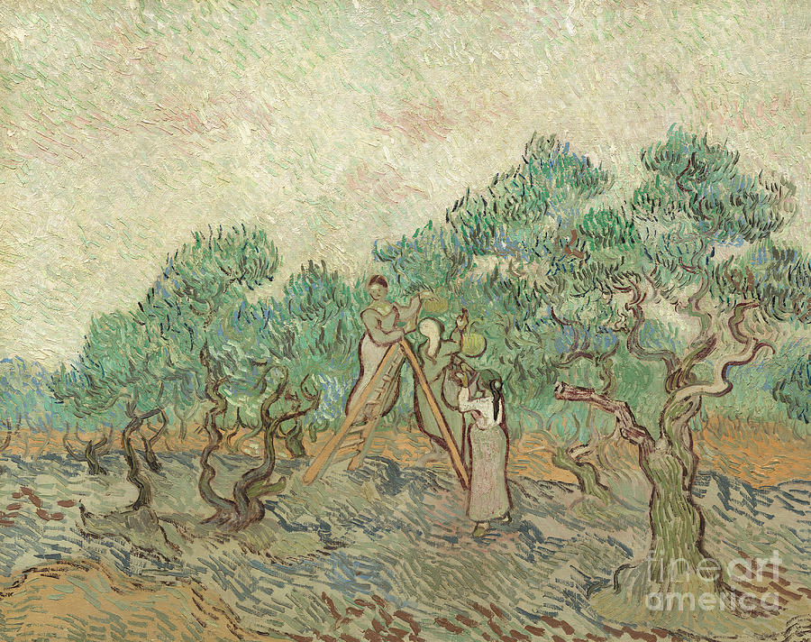 Van Gogh Painting - The Olive Orchard, 1889 by Vincent Van Gogh