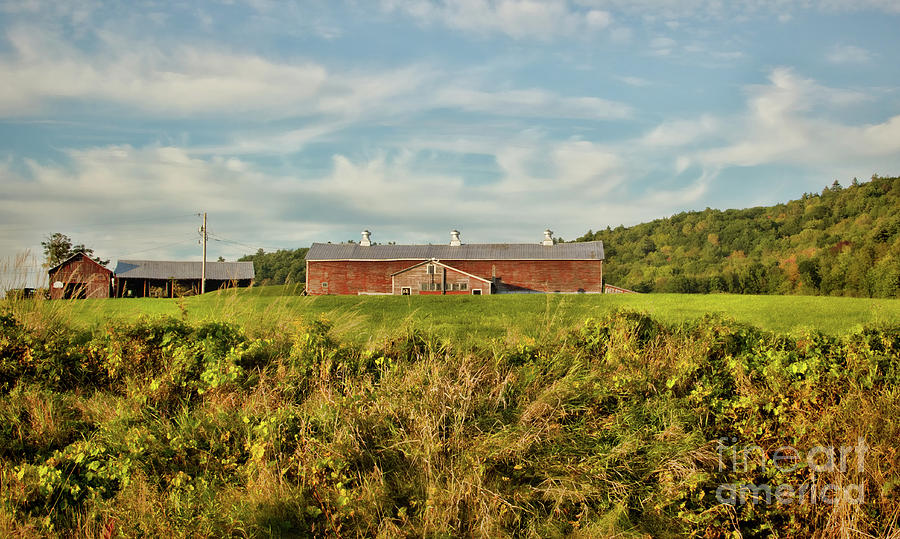 Old Barns Photograph - The Red Barn by Diana Nault