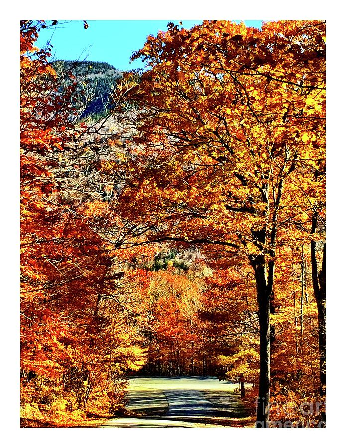 Autumn Photograph - The Richness Of Autumn Treasures by S Forte Designs