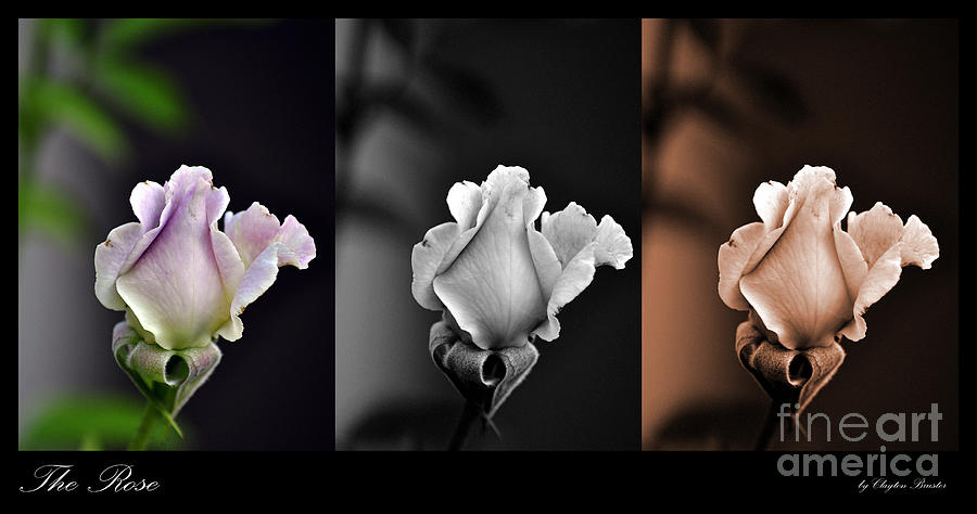 Clay Photograph - The Rose by Clayton Bruster