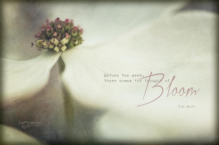 The Thought of Bloom by Joy Gerow