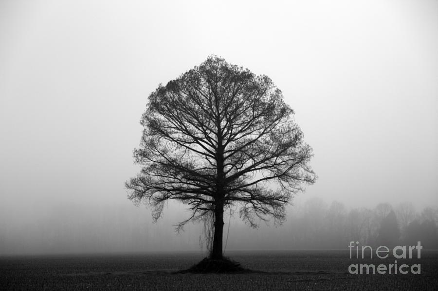 Tree Photograph - The Tree by Amanda Barcon
