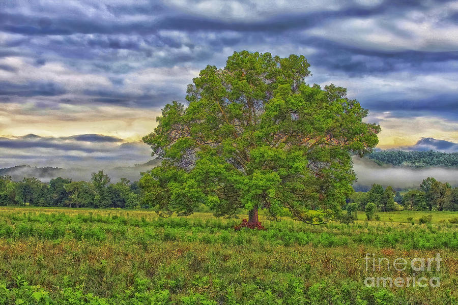 The Tree Photograph - The Tree by Geraldine DeBoer