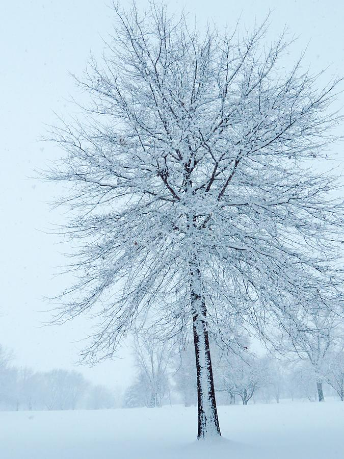 Trees Photograph - The Winter Tree  by Lori Frisch