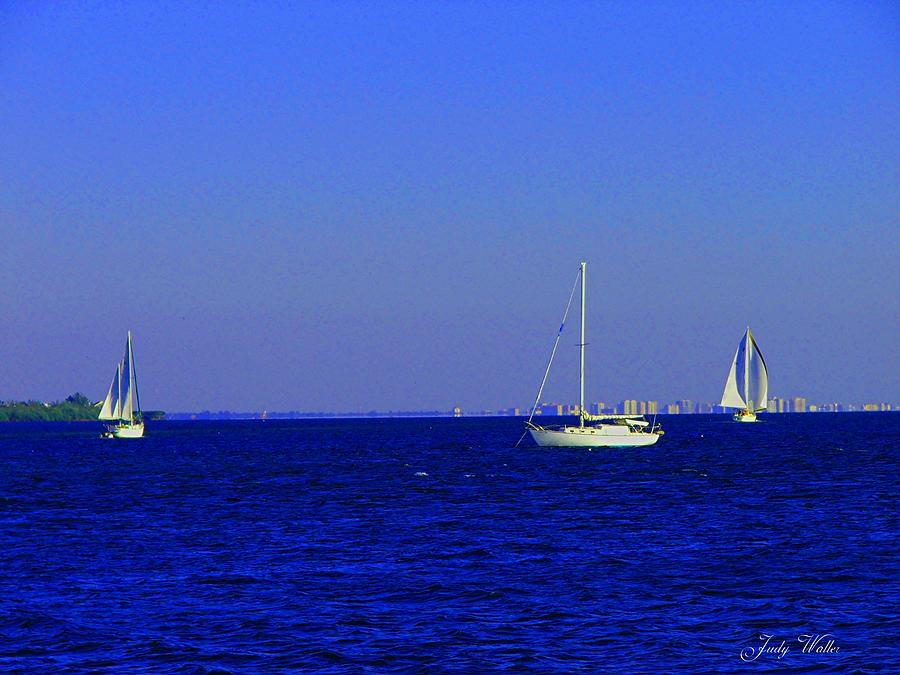 Blue Photograph - There Are Three by Judy  Waller
