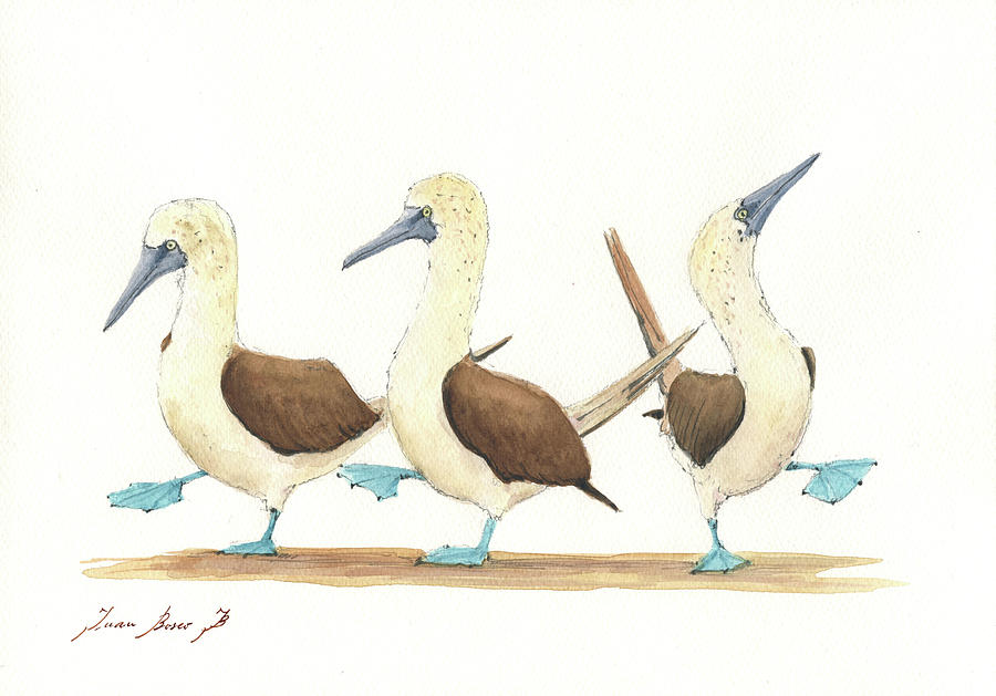 Bird Watercolor Painting - Three Blue Footed Boobies by Juan Bosco