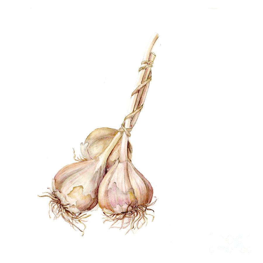 Farmers Market Painting - Three Garlics by Fran Henig