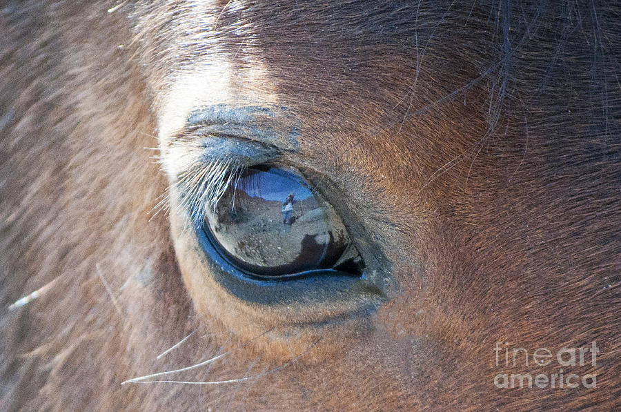 Through His Eye by Lula Adams