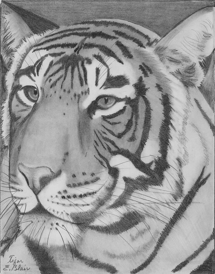 Cat Drawing - Tigar by Eileen Blair