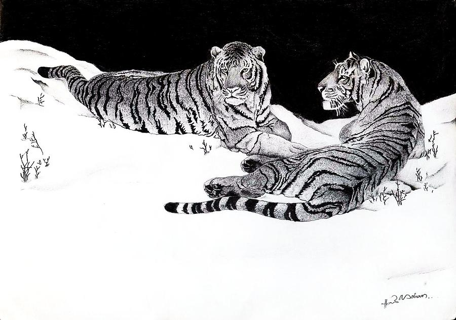 Tigers Drawing - Tigers In The Snow by Hari Mohan