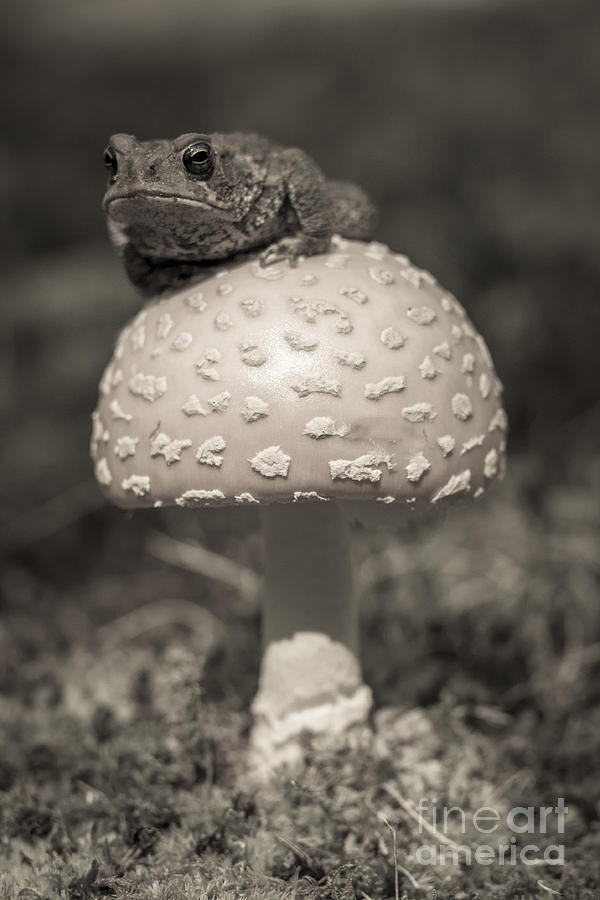 Toads Stool Photograph