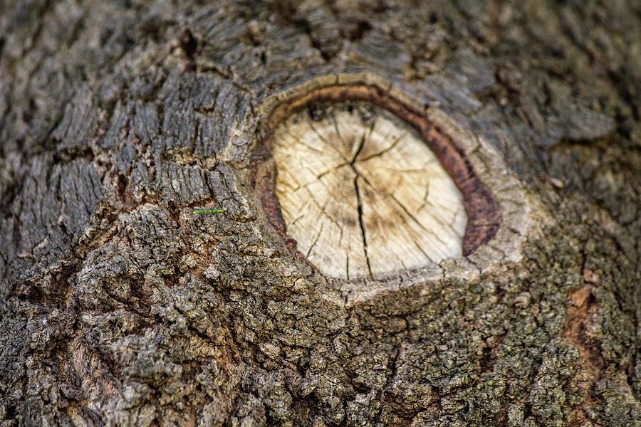 Bark Photograph - Tree Bark 2 by Tania Read
