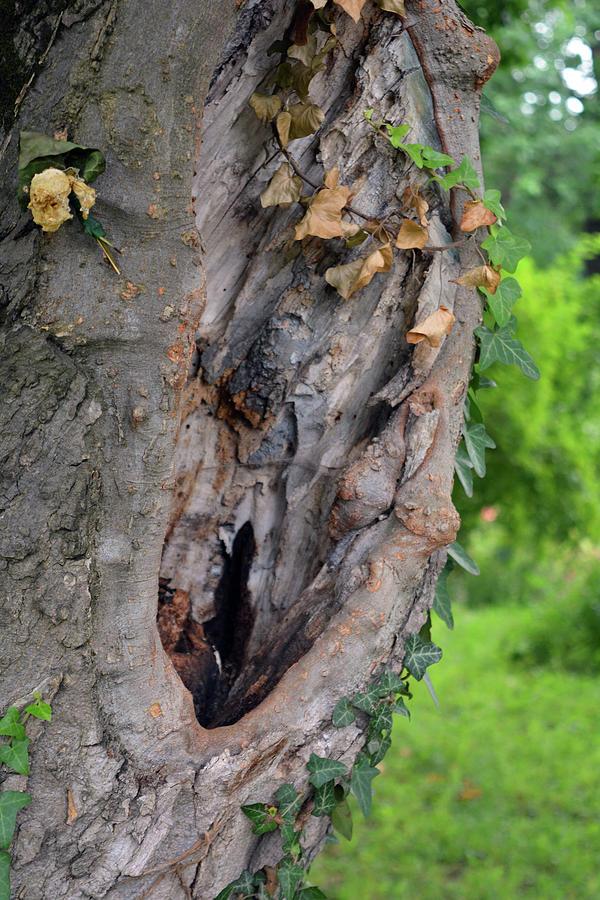 Tree Photograph - Tree Bark Detail, Natural Background. by Oana Unciuleanu