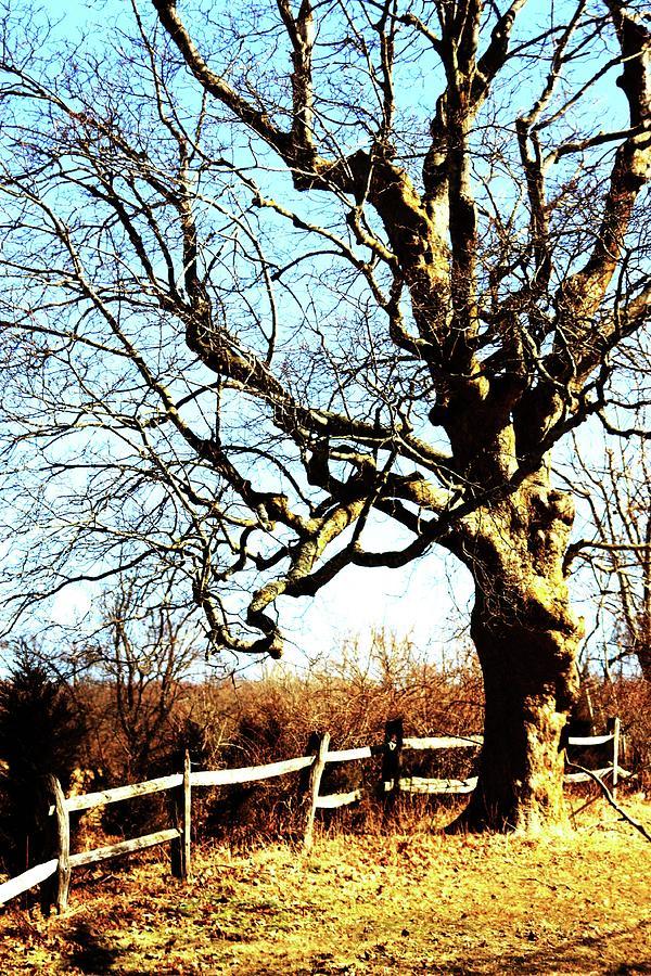 Tree Photograph - Tree by Dana Flaherty