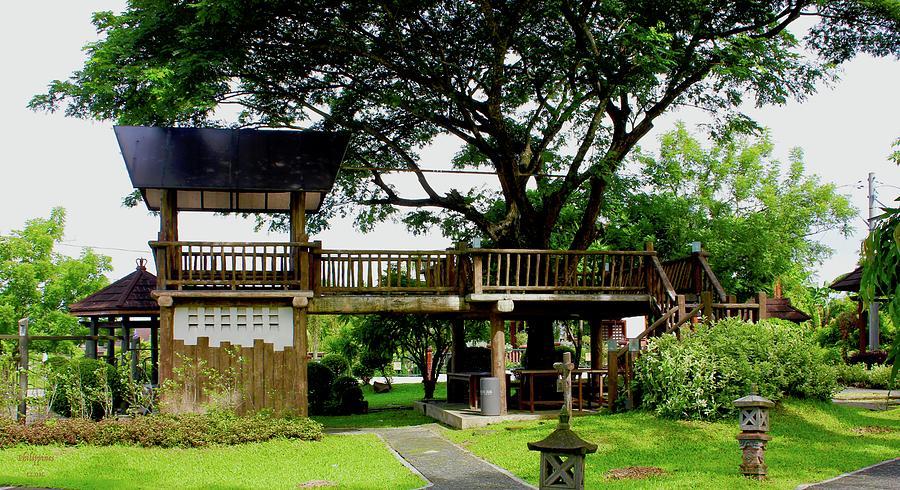 Tree House Photograph