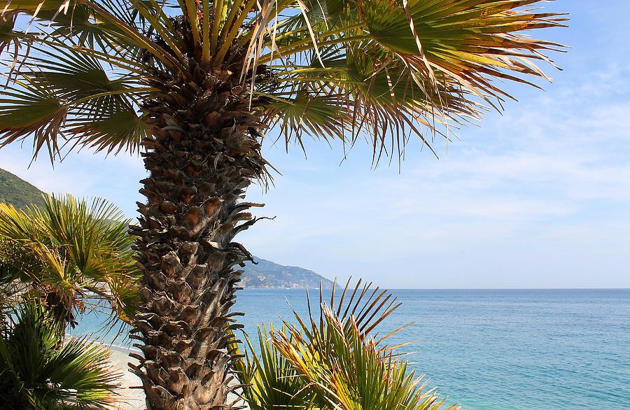 Tree Of The Ligurian Sea Photograph