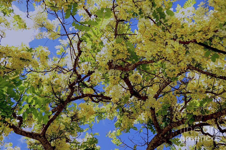 Tree Photograph - Trees And Flowers In Hawaii by D Davila
