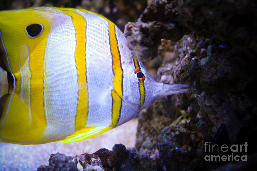 Tropical Fish Photograph by Brenton Woodruff