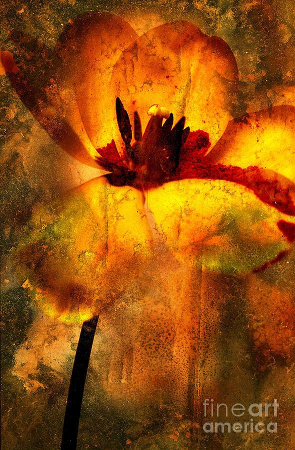 Bloom Photograph - Tulip by Bernard Jaubert