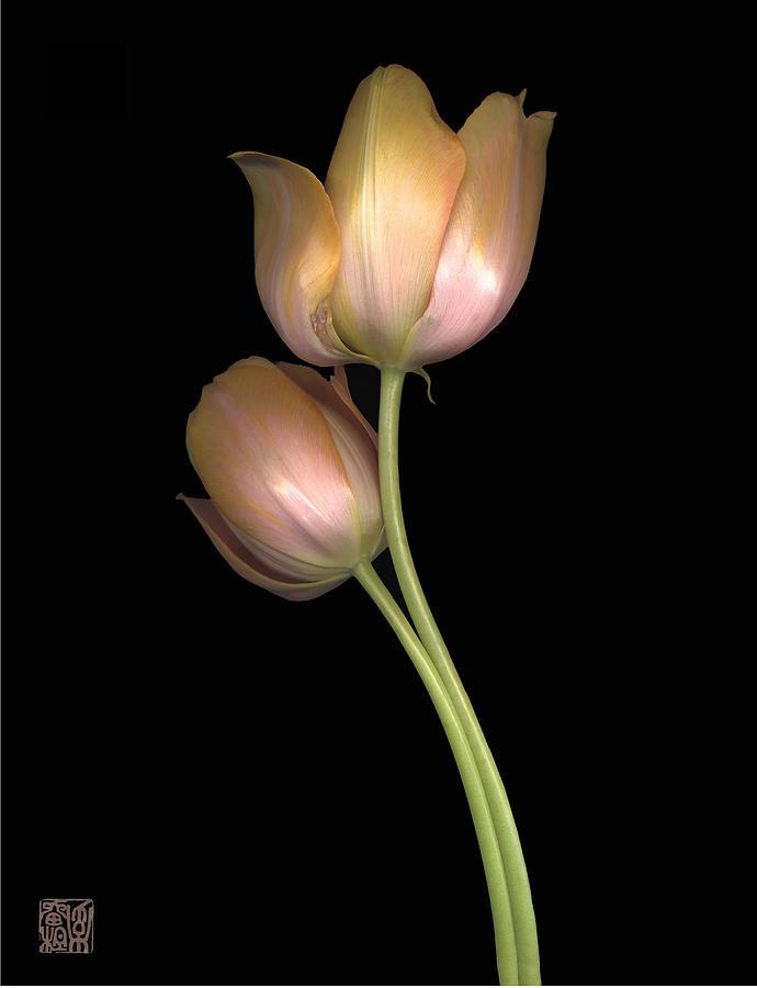 Flower Photograph - Tulip by Lloyd Liebes