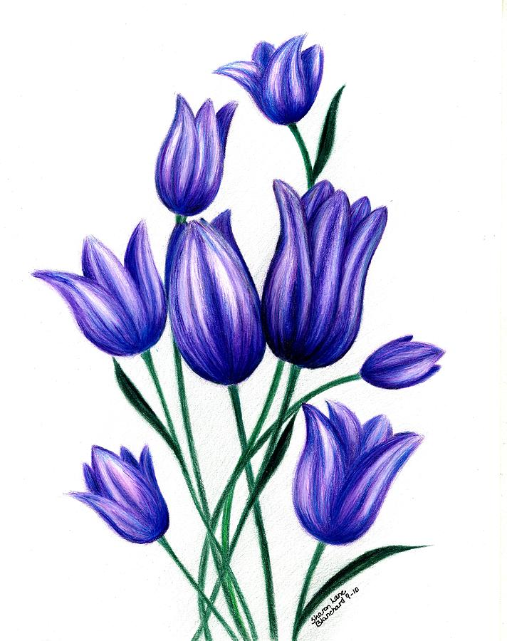 Tulips For Harry Drawing by Sharon Blanchard