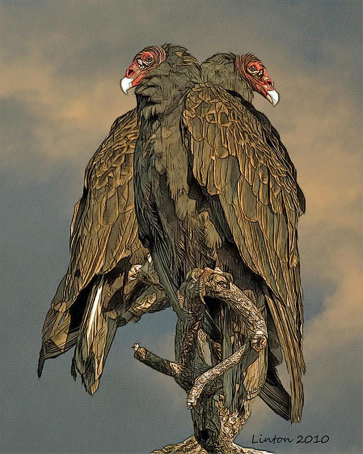 Turkey Vulture Digital Art - Turkey Vulture Pair by Larry Linton