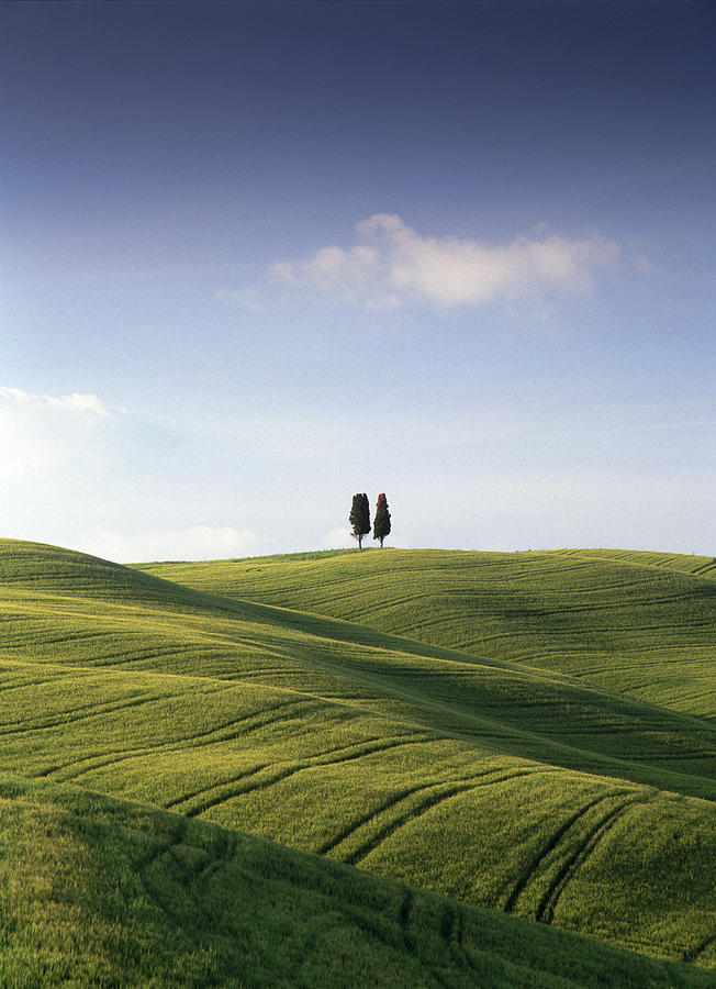 Photograph Photograph - Twin Cypresses by Michael Hudson