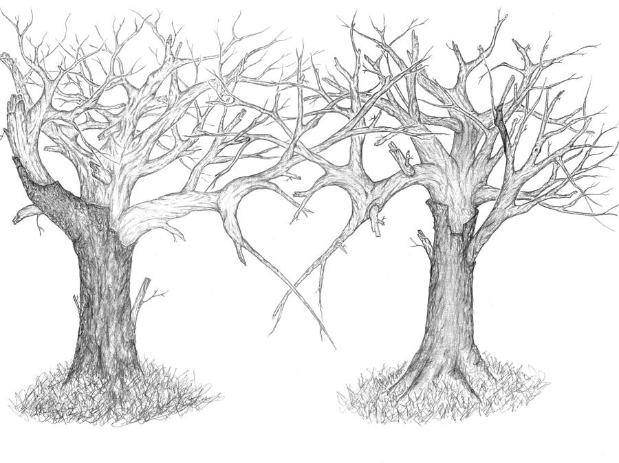 Two Trees Drawing By Luke Cain