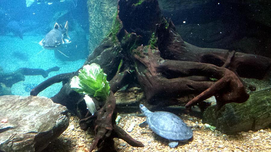 Underwater Vista by Kenny Glover