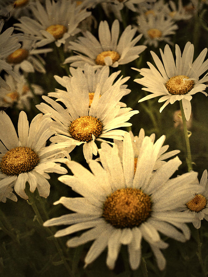 Flowers Photograph - Untitled by Tara Turner
