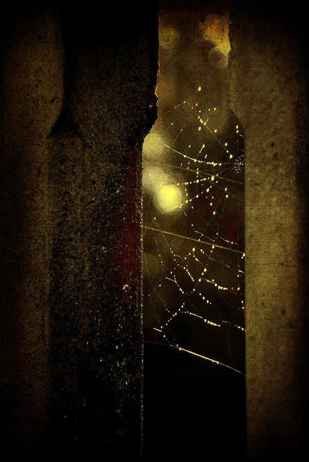Illustration Photograph - Untitled by Valmir Ribeiro